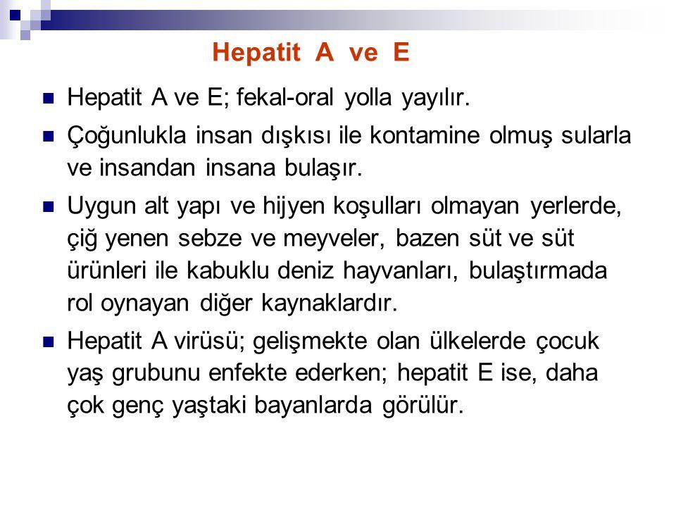 Hepatit A Virüsü (HAV) Tek serotipi vardır ve sadece insanlarda hastalık yapar.