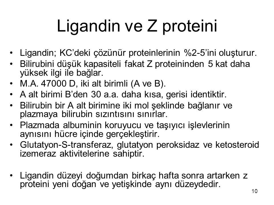 10 Ligandin ve Z proteini Ligandin; KC'deki çözünür proteinlerinin %2-5'ini oluşturur. Bilirubini düşük kapasiteli fakat Z proteininden 5 kat daha yük