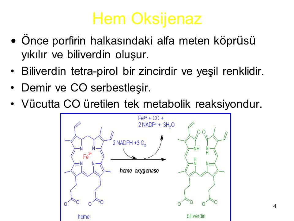 4 Hem Oksijenaz Ö nce porfirin halkasındaki alfa meten k ö pr ü s ü yıkılır ve biliverdin oluşur. Biliverdin tetra-pirol bir zincirdir ve yeşil renkli