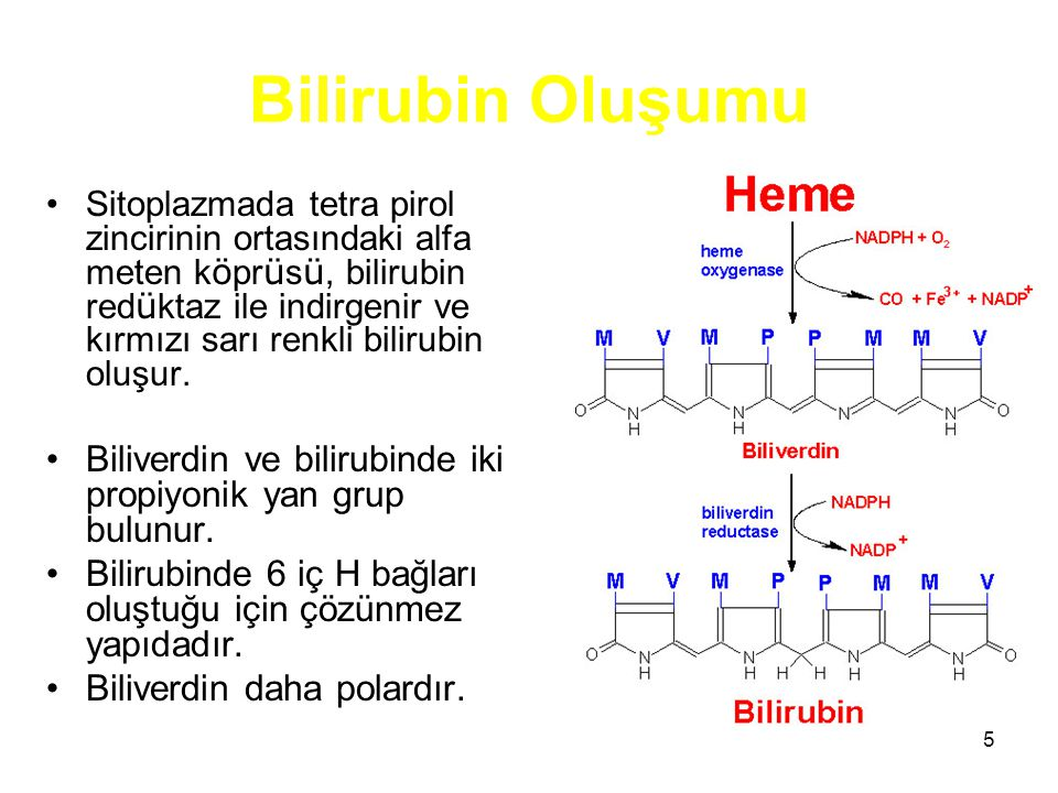 5 Bilirubin Oluşumu Sitoplazmada tetra pirol zincirinin ortasındaki alfa meten k ö pr ü s ü, bilirubin red ü ktaz ile indirgenir ve kırmızı sarı renkli bilirubin oluşur.