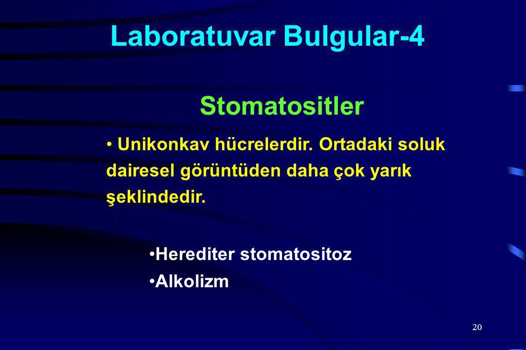 20 Laboratuvar Bulgular-4 Unikonkav hücrelerdir.