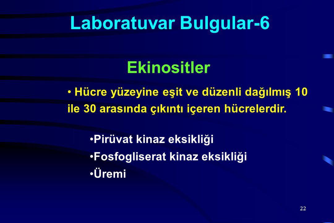 22 Laboratuvar Bulgular-6 Hücre yüzeyine eşit ve düzenli dağılmış 10 ile 30 arasında çıkıntı içeren hücrelerdir.