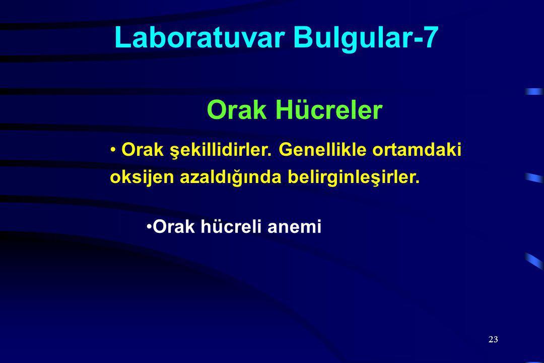 23 Laboratuvar Bulgular-7 Orak şekillidirler.