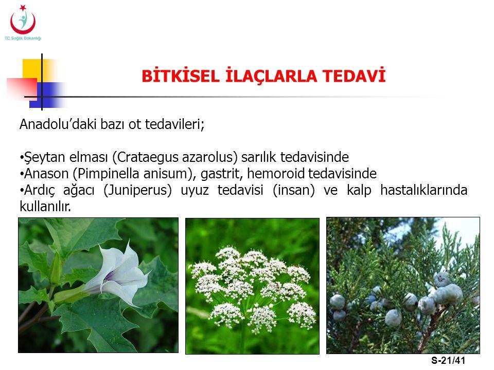 S-21/41 Anadolu'daki bazı ot tedavileri; Şeytan elması (Crataegus azarolus) sarılık tedavisinde Anason (Pimpinella anisum), gastrit, hemoroid tedavisi