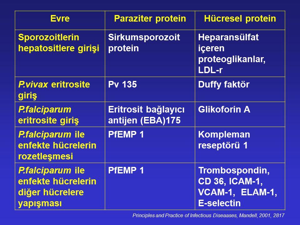 EvreParaziter proteinHücresel protein Sporozoitlerin hepatositlere girişi Sirkumsporozoit protein Heparansülfat içeren proteoglikanlar, LDL-r P.vivax