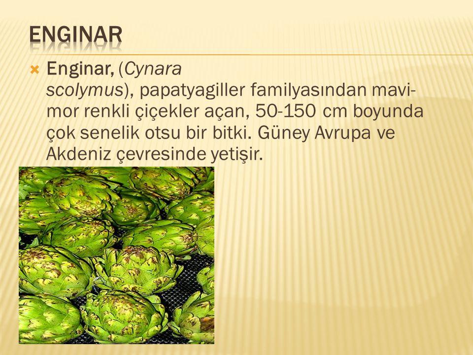  Enginar, (Cynara scolymus), papatyagiller familyasından mavi- mor renkli çiçekler açan, 50-150 cm boyunda çok senelik otsu bir bitki. Güney Avrupa v