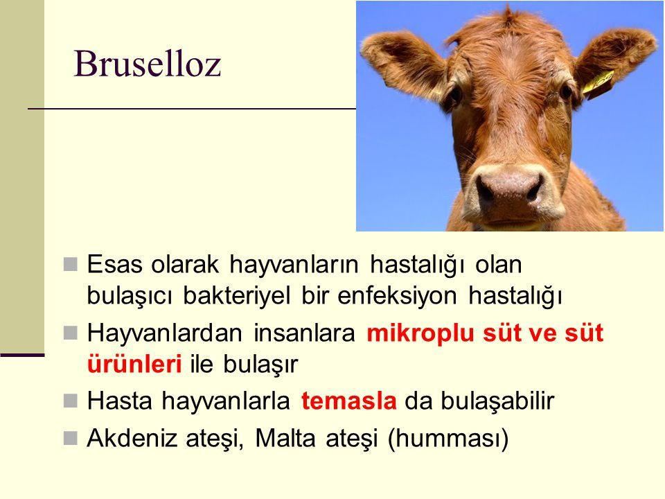 Bruselloz Esas olarak hayvanların hastalığı olan bulaşıcı bakteriyel bir enfeksiyon hastalığı Hayvanlardan insanlara mikroplu süt ve süt ürünleri ile
