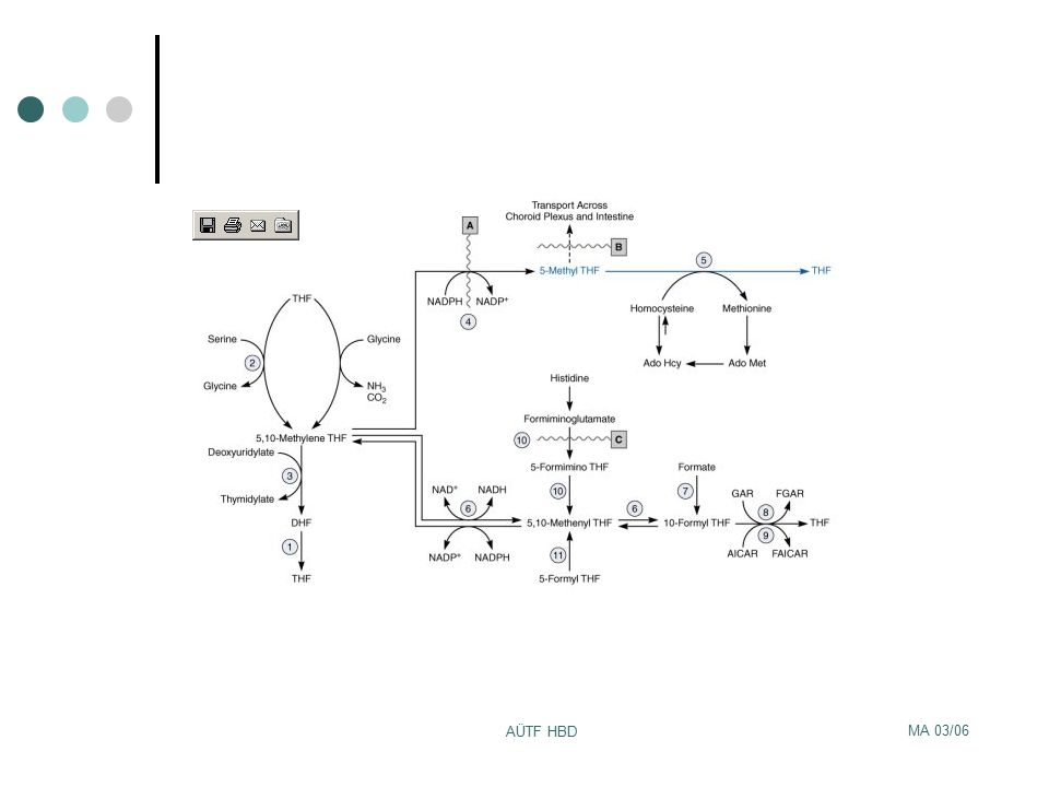 MA 03/06 AÜTF HBD Yanlış düşük serum kobalamin düzeyi Folat eksikliği Multipl myeloma Transkobalamin 1 eksikliği Megadoz vitamin C tedavisi Yanlış yüksek serum kobalamin düzeyi Transkobalamin I-II arttığı durumlar(myeloproliferatif hast,hepatoma) Transkobalamin II üreten makrofajların artışı(otoimmün hast, monoblastik lösemi, lenfoma) Hepatositlerden kobalamin salınımı (Aktif KC hast)