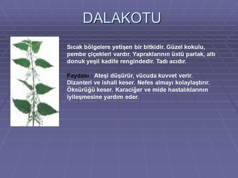DALAKOTU Sıcak bölgelere yetişen bir bitkidir.Güzel kokulu, pembe çiçekleri vardır.