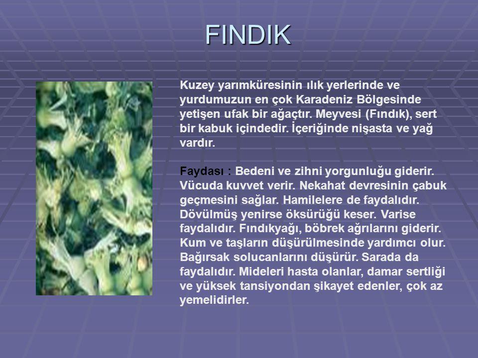 FINDIK Kuzey yarımküresinin ılık yerlerinde ve yurdumuzun en çok Karadeniz Bölgesinde yetişen ufak bir ağaçtır.