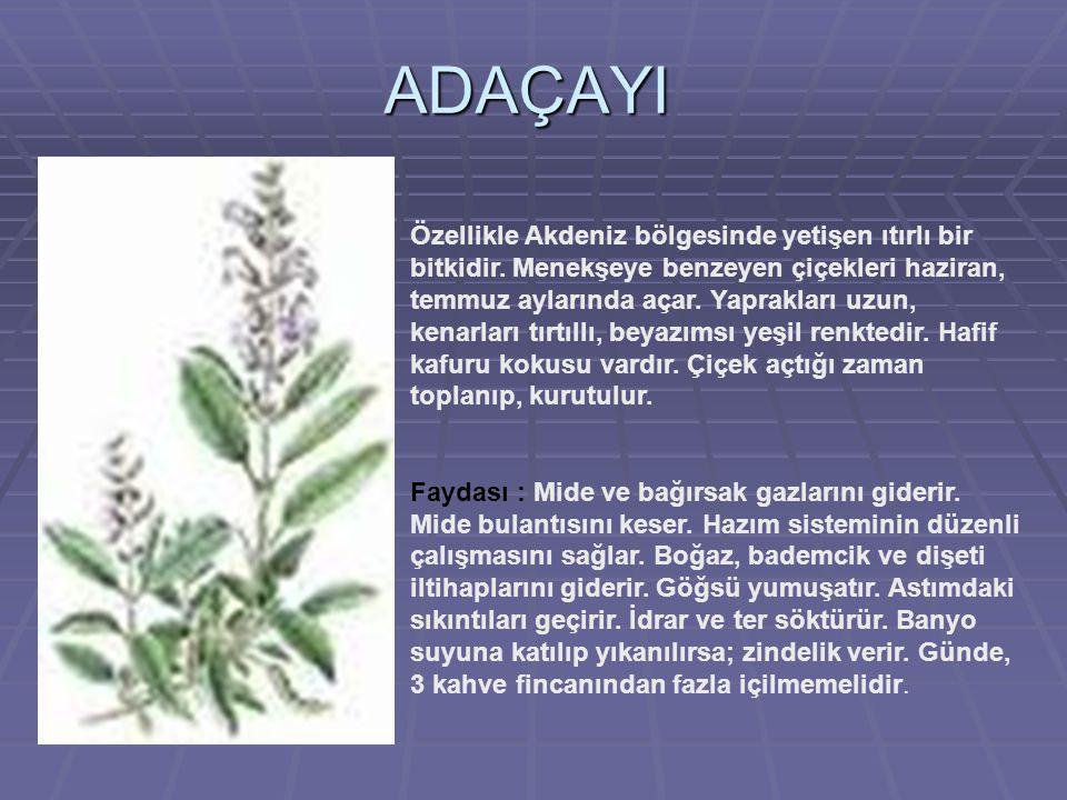 ADAÇAYI Özellikle Akdeniz bölgesinde yetişen ıtırlı bir bitkidir.