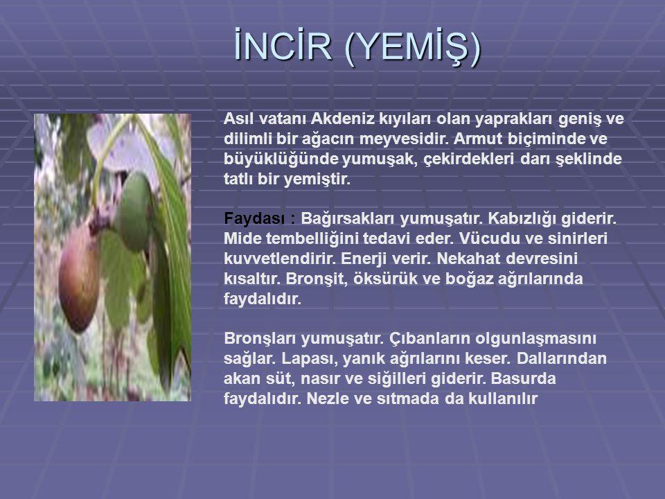 İNCİR (YEMİŞ) Asıl vatanı Akdeniz kıyıları olan yaprakları geniş ve dilimli bir ağacın meyvesidir.