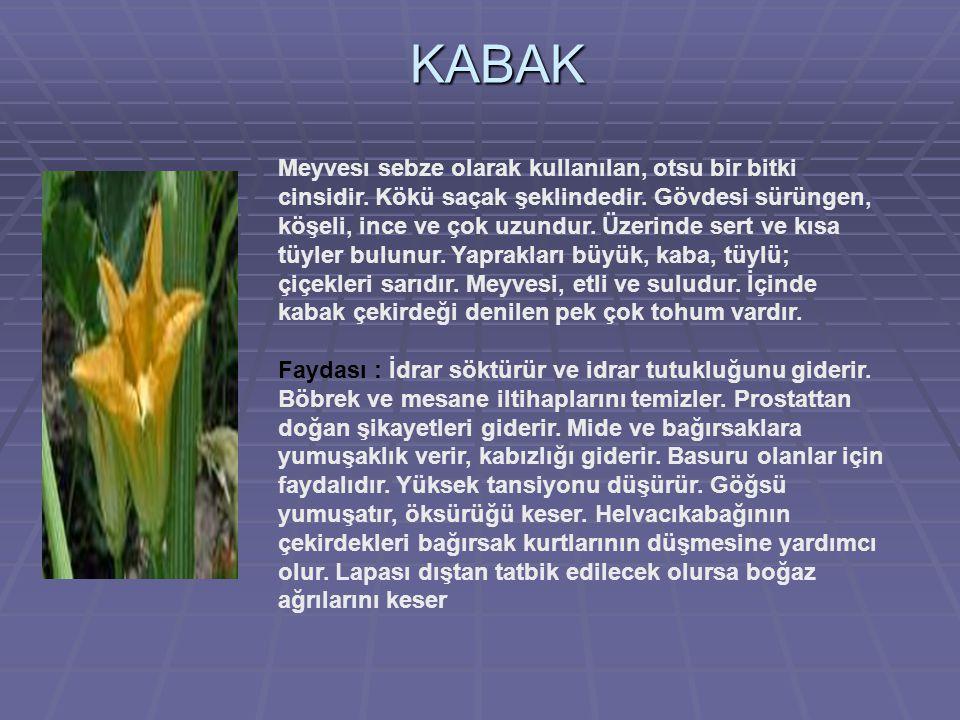 KABAK Meyvesı sebze olarak kullanılan, otsu bir bitki cinsidir.