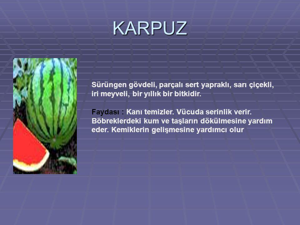 KARPUZ Sürüngen gövdeli, parçalı sert yapraklı, sarı çiçekli, iri meyveli, bir yıllık bir bitkidir.