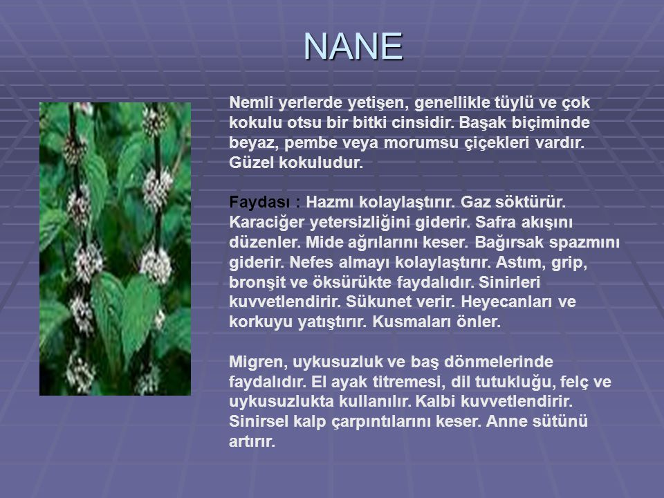 NANE Nemli yerlerde yetişen, genellikle tüylü ve çok kokulu otsu bir bitki cinsidir.