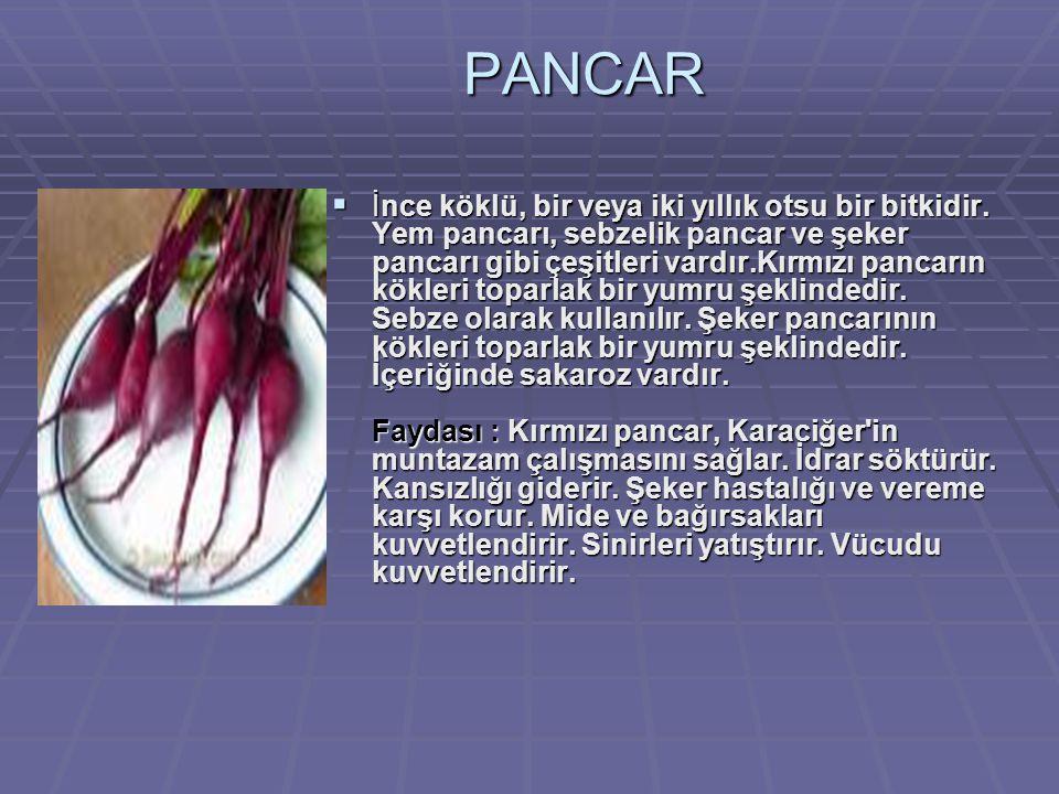 PANCAR  İnce köklü, bir veya iki yıllık otsu bir bitkidir.