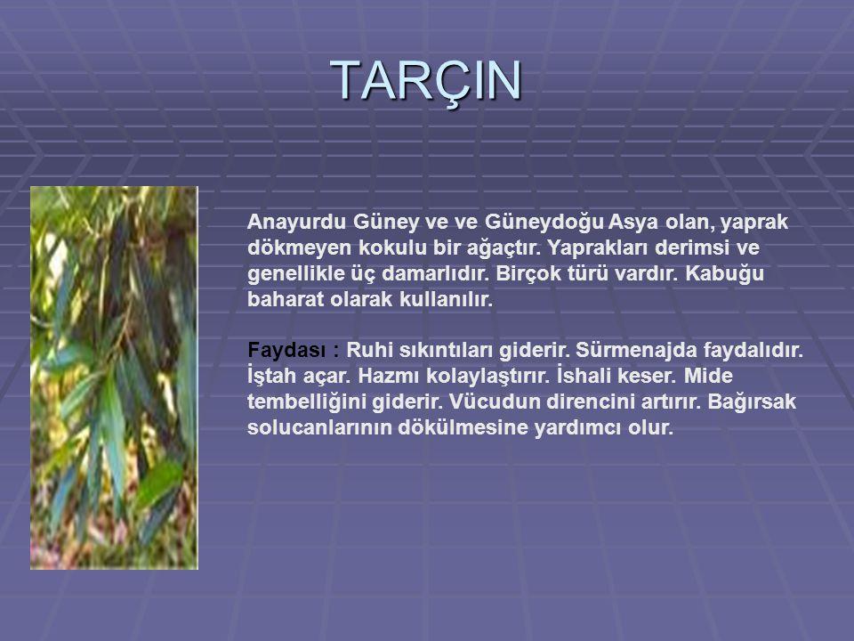 TARÇIN Anayurdu Güney ve ve Güneydoğu Asya olan, yaprak dökmeyen kokulu bir ağaçtır.