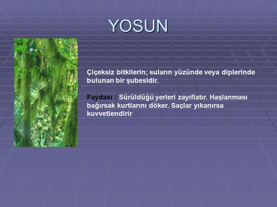 YOSUN Çiçeksiz bitkilerin; suların yüzünde veya diplerinde bulunan bir şubesidir.