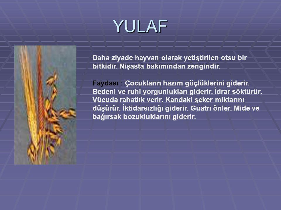 YULAF Daha ziyade hayvan olarak yetiştirilen otsu bir bitkidir.