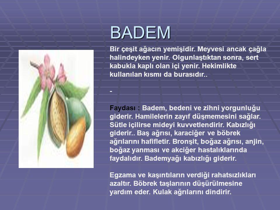 BADEM Bir çeşit ağacın yemişidir.Meyvesi ancak çağla halindeyken yenir.