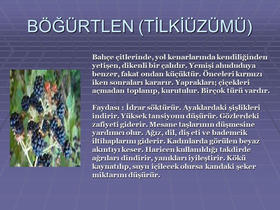 ÇÖREKOTU (SİYAH SUSAM) Susam iriliğinde siyah tohumları olan bir çeşit bitkidir.