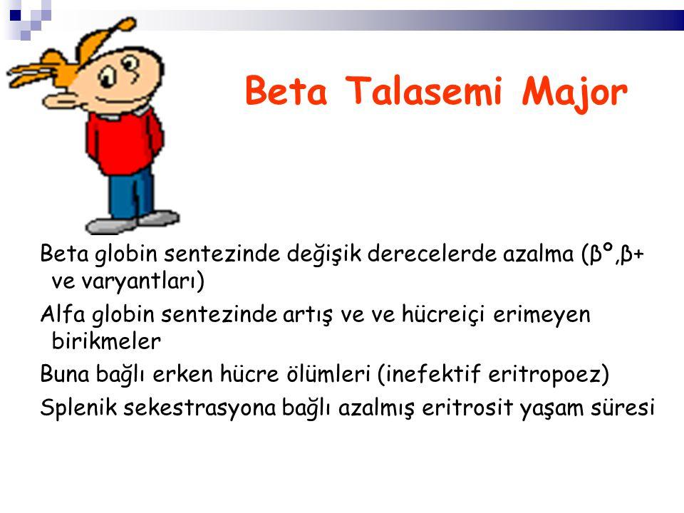 Beta Talasemi Major Beta globin sentezinde değişik derecelerde azalma (βº,β+ ve varyantları) Alfa globin sentezinde artış ve ve hücreiçi erimeyen birikmeler Buna bağlı erken hücre ölümleri (inefektif eritropoez) Splenik sekestrasyona bağlı azalmış eritrosit yaşam süresi