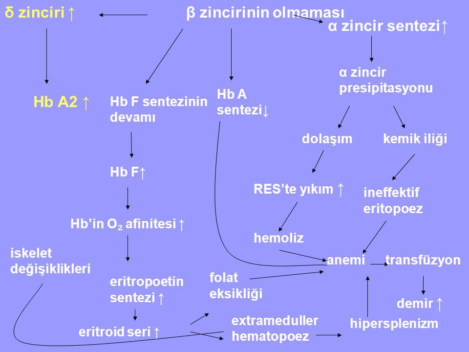 β zincirinin olmaması δ zinciri ↑ Hb A2 ↑ Hb F sentezinin devamı Hb F↑ Hb'in O ₂ afinitesi ↑ eritropoetin sentezi ↑ eritroid seri ↑ Hb A sentezi↓ α zincir sentezi↑ α zincir presipitasyonu dolaşımkemik iliği RES'te yıkım ↑ hemoliz anemi ineffektif eritopoez folat eksikliği extrameduller hematopoez hipersplenizm iskelet değişiklikleri transfüzyon demir ↑