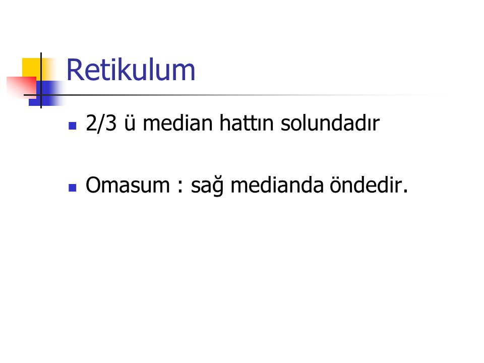 Retikulum 2/3 ü median hattın solundadır Omasum : sağ medianda öndedir.