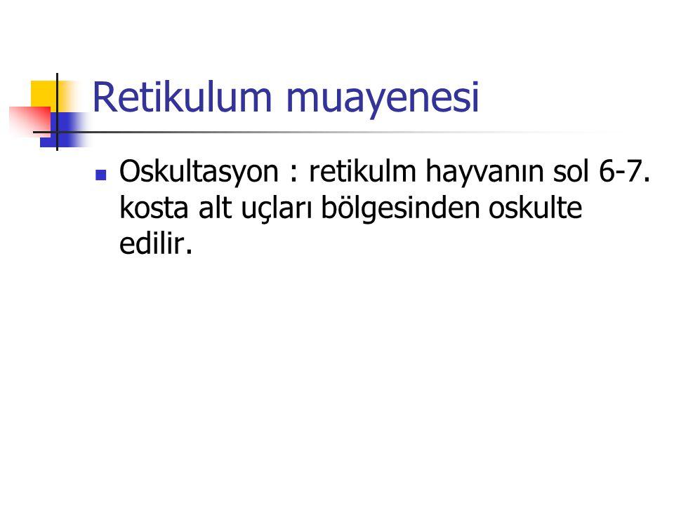 Retikulum muayenesi Oskultasyon : retikulm hayvanın sol 6-7.