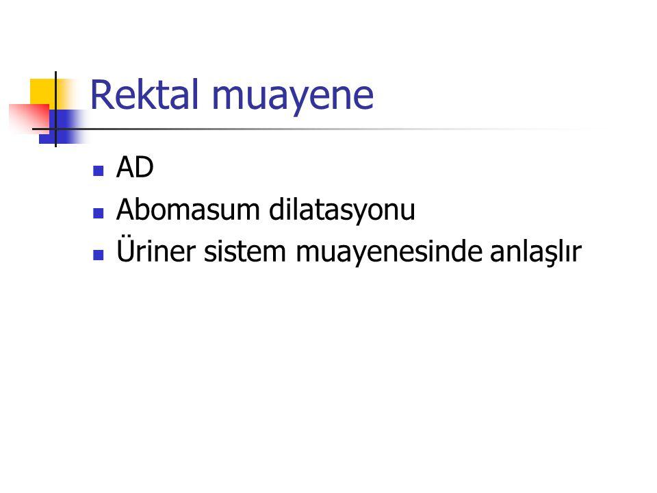 Rektal muayene AD Abomasum dilatasyonu Üriner sistem muayenesinde anlaşlır