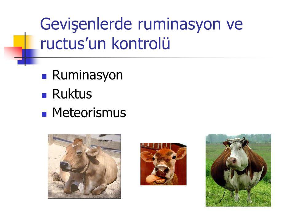 Gevişenlerde ruminasyon ve ructus'un kontrolü Ruminasyon Ruktus Meteorismus