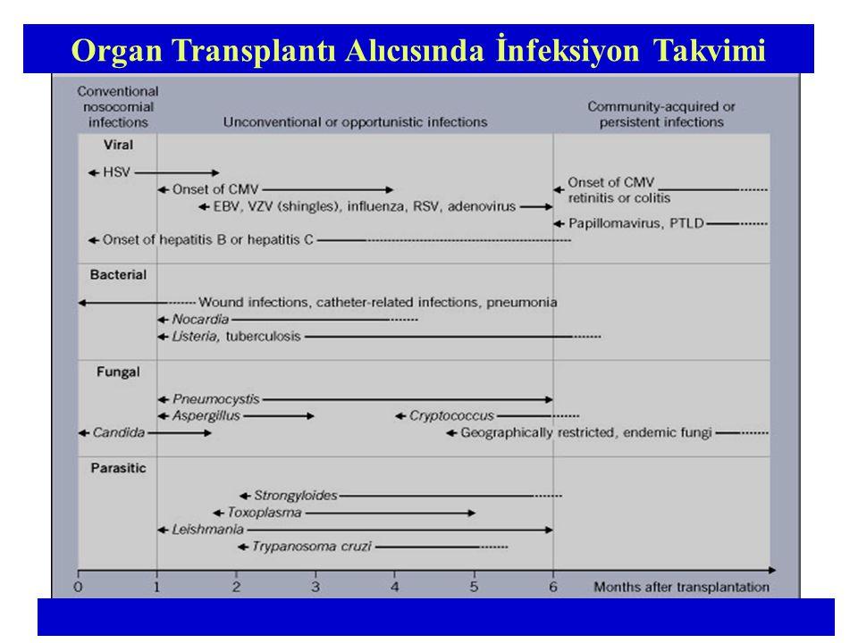 Organ Transplantı Alıcısında İnfeksiyon Takvimi
