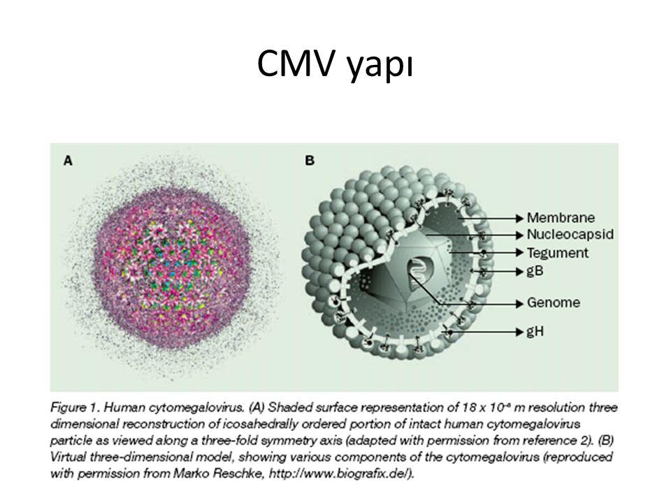 Neonatal CMV klinik