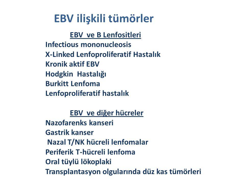 EBV ve B Lenfositleri Infectious mononucleosis X-Linked Lenfoproliferatif Hastalık Kronik aktif EBV Hodgkin Hastalığı Burkitt Lenfoma Lenfoproliferatif hastalık EBV ve diğer hücreler Nazofarenks kanseri Gastrik kanser Nazal T/NK hücreli lenfomalar Periferik T-hücreli lenfoma Oral tüylü lökoplaki Transplantasyon olgularında düz kas tümörleri EBV ilişkili tümörler