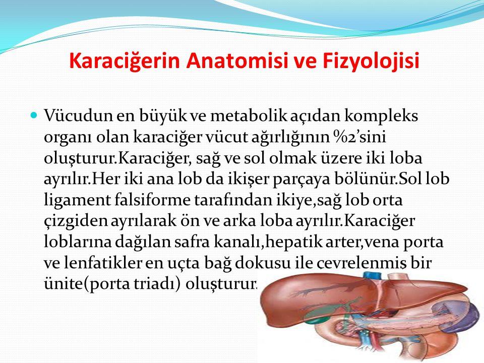 Karaciğerin Anatomisi ve Fizyolojisi Vücudun en büyük ve metabolik açıdan kompleks organı olan karaciğer vücut ağırlığının %2'sini oluşturur.Karaciğer