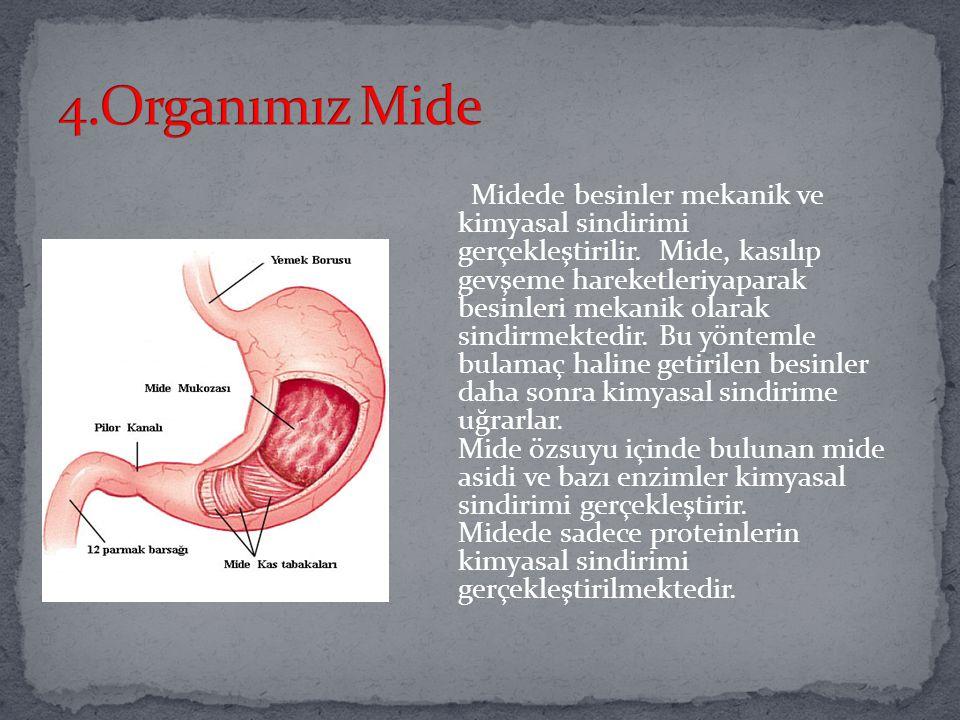 Yemek borusu da sindirim gerçekleşmeyen bir bölümdür. Yemek borusundaki kaslar peristaltik hareket denilen br yöntemle besinleri mideye doğru iter. Bi
