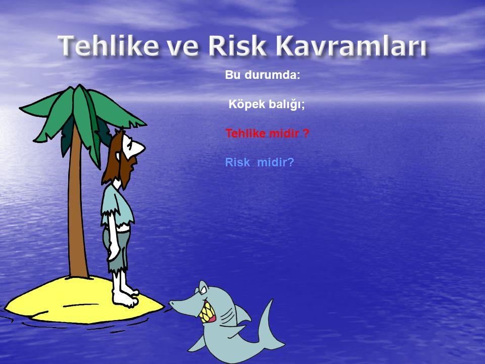 Bu durumda: Köpek balığı; Tehlike midir ? Risk midir?