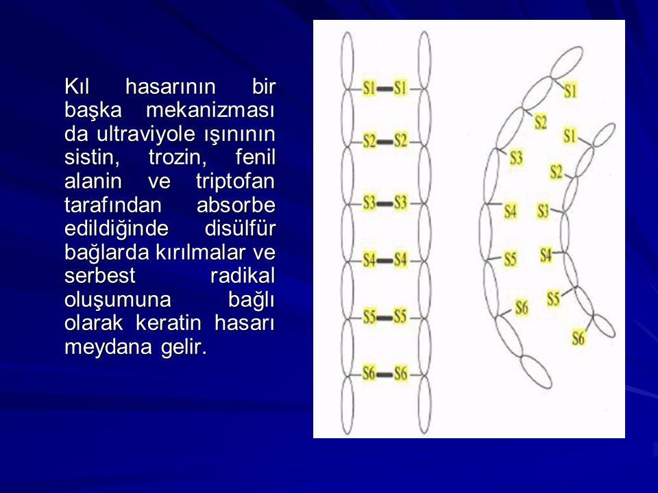 Kıl hasarının bir başka mekanizması da ultraviyole ışınının sistin, trozin, fenil alanin ve triptofan tarafından absorbe edildiğinde disülfür bağlarda
