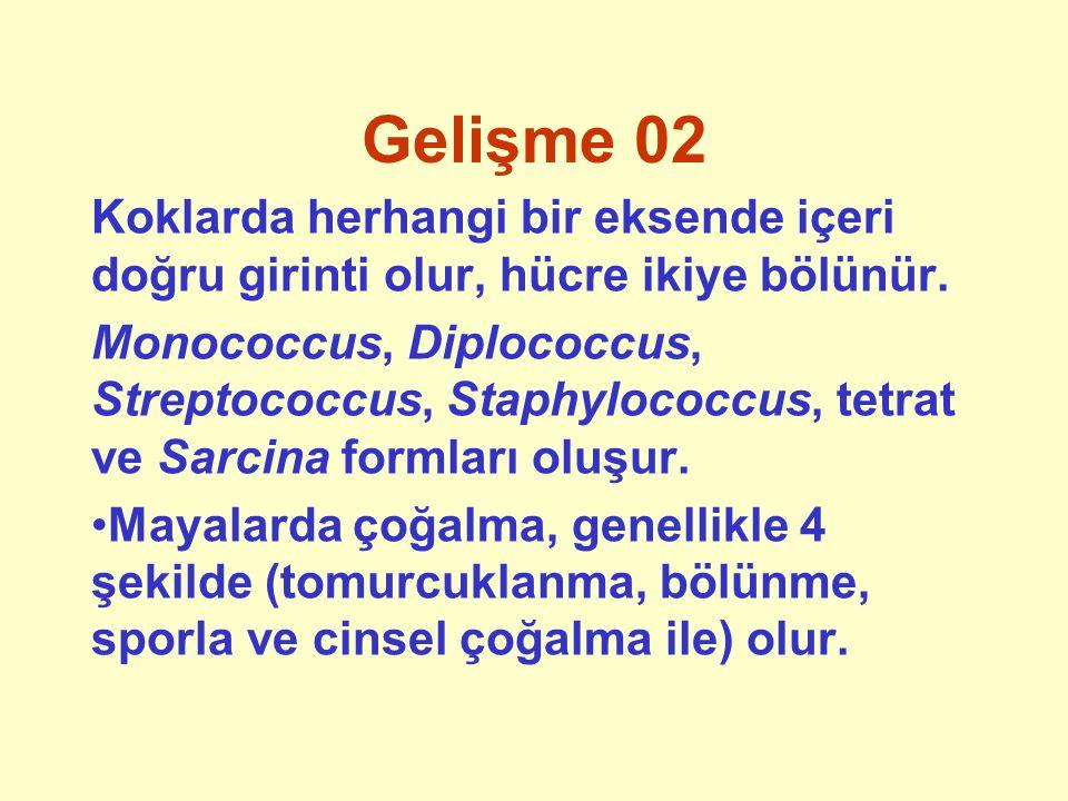 Asitlik 01 Mikroorganizmalar farklı asitlik ortamlarında optimum olarak gelişir.