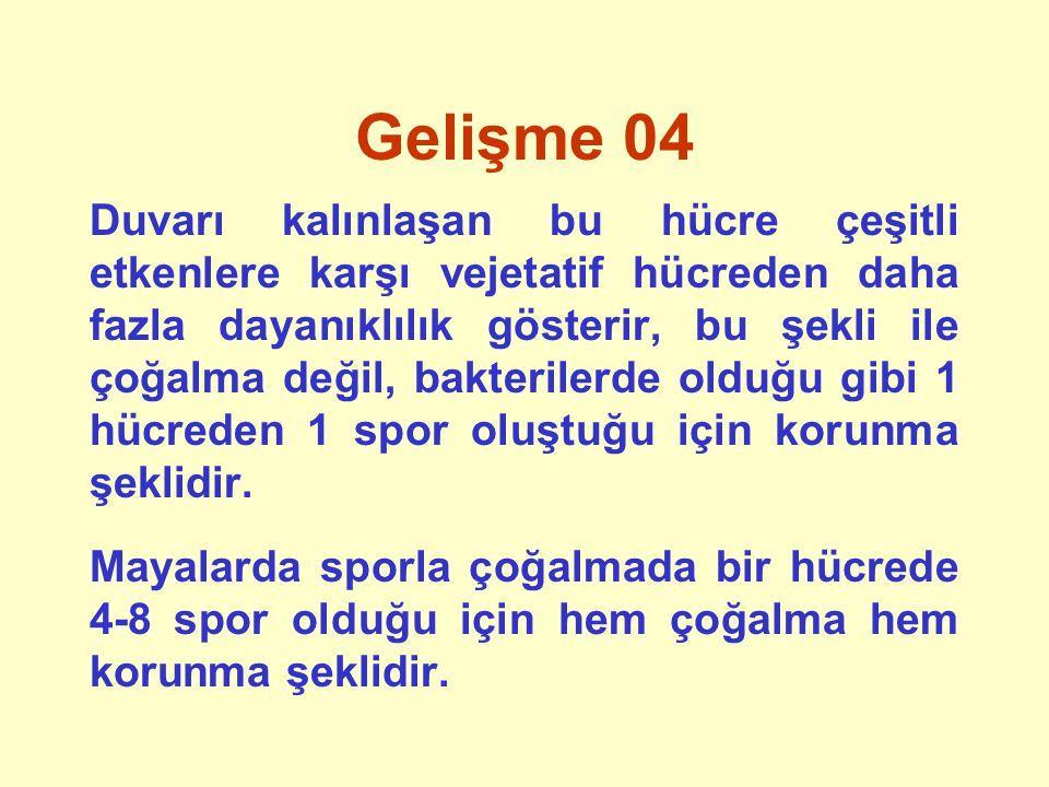 Gelişme 05 (fajlar) Kaynak: Emel Kahraman YL Tez Sunusu; AÜGDM
