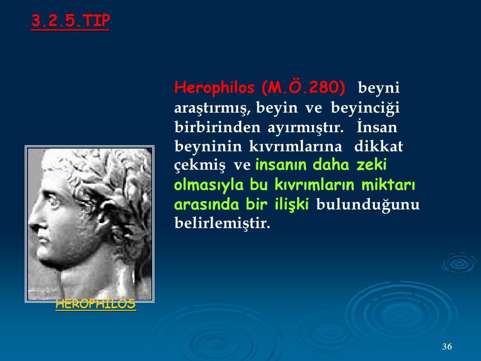 3.2.5.TIP Herophilos (M.Ö.280) beyni araştırmış, beyin ve beyinciği birbirinden ayırmıştır.