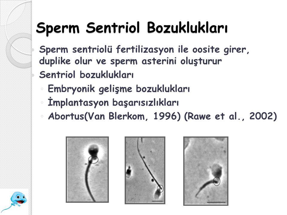 Sperm Sentriol Bozuklukları Sperm sentriolü fertilizasyon ile oosite girer, duplike olur ve sperm asterini oluşturur Sentriol bozuklukları ◦ Embryonik