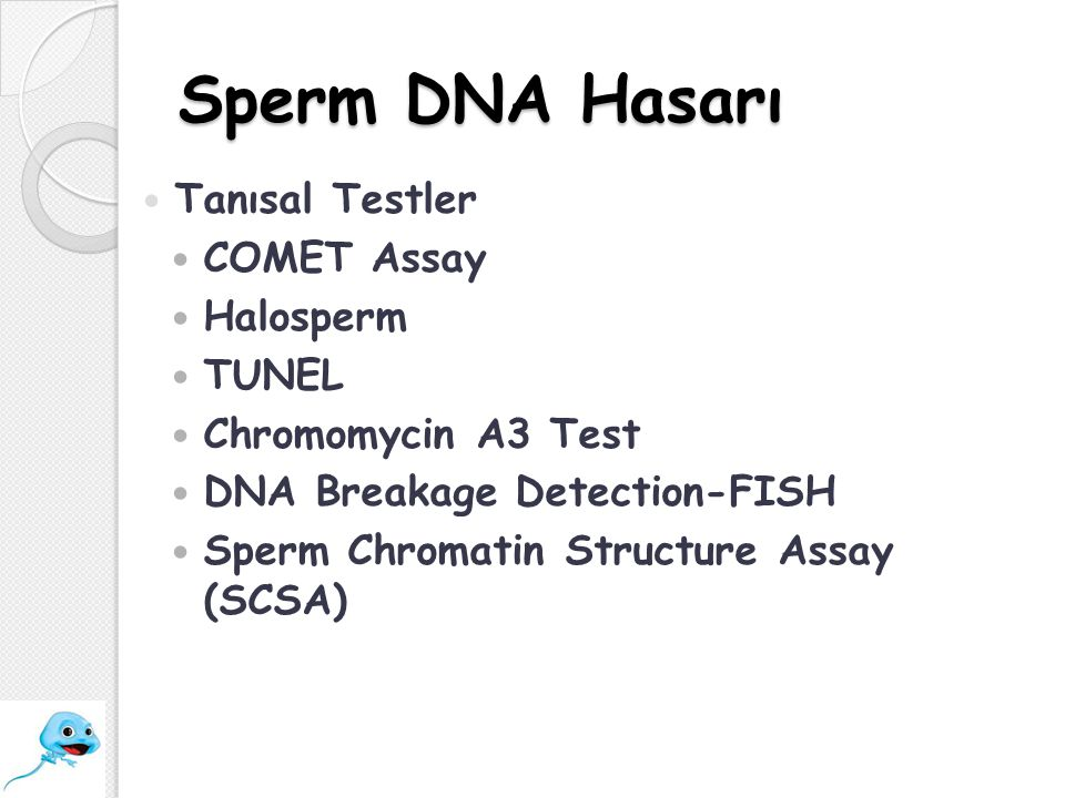 Sperm DNA Hasarı Tanısal Testler COMET Assay Halosperm TUNEL Chromomycin A3 Test DNA Breakage Detection-FISH Sperm Chromatin Structure Assay (SCSA)