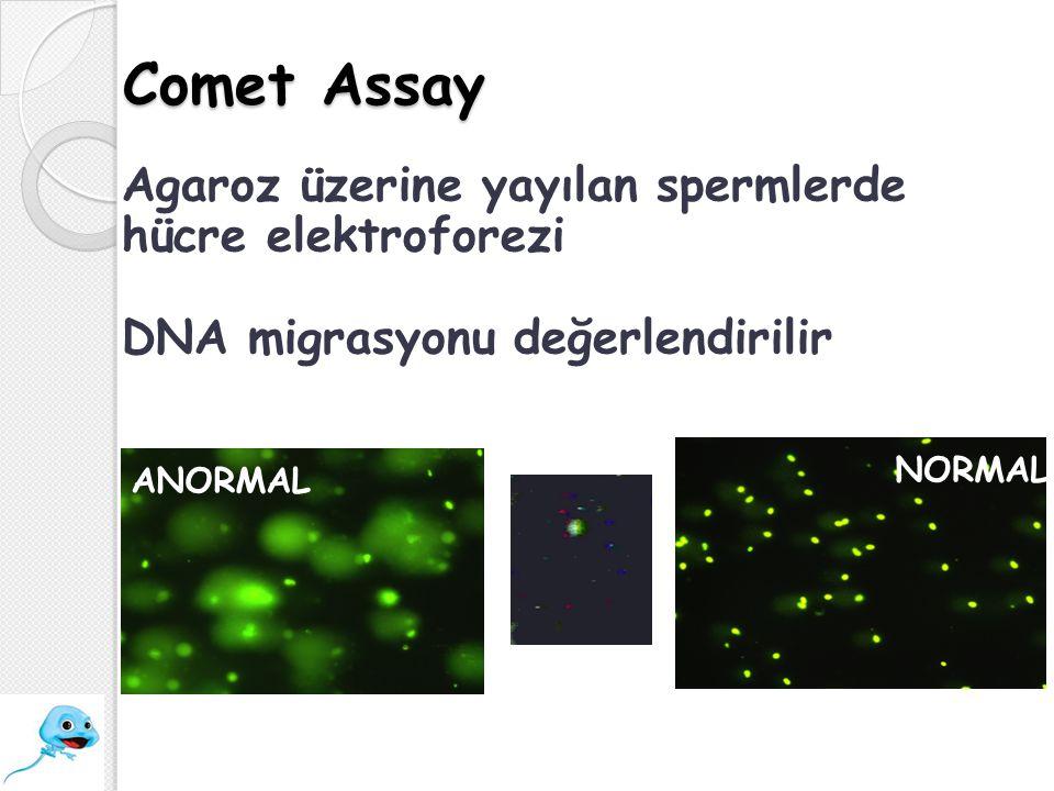 Comet Assay ANORMAL NORMAL Agaroz üzerine yayılan spermlerde hücre elektroforezi DNA migrasyonu değerlendirilir