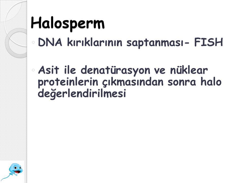 Halosperm ◦ DNA kırıklarının saptanması- FISH ◦ Asit ile denatürasyon ve nüklear proteinlerin çıkmasından sonra halo değerlendirilmesi