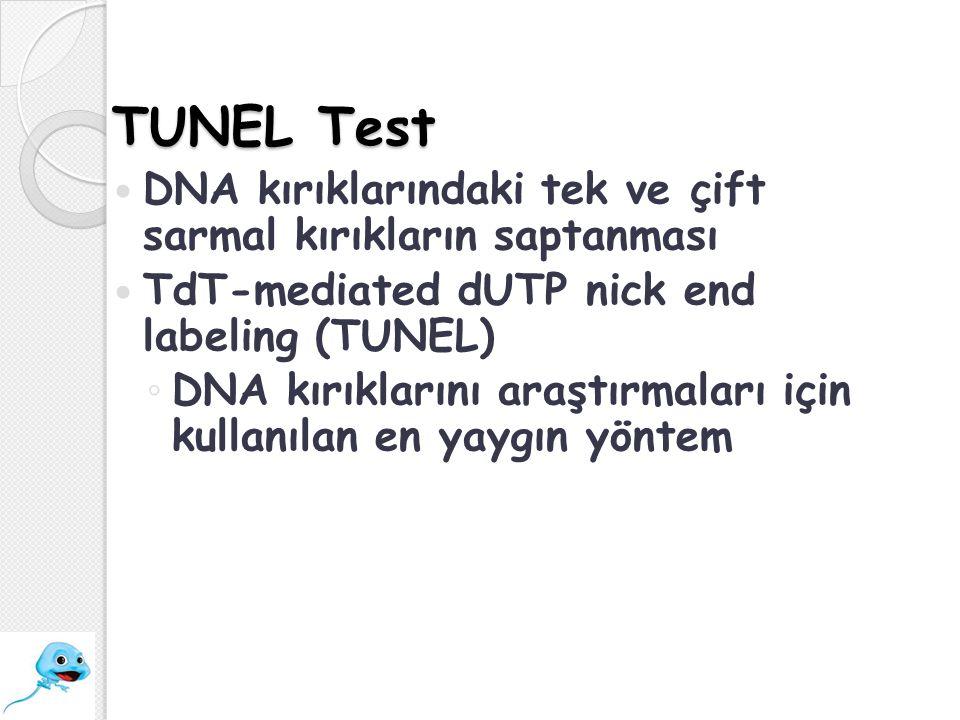 TUNEL Test DNA kırıklarındaki tek ve çift sarmal kırıkların saptanması TdT-mediated dUTP nick end labeling (TUNEL) ◦ DNA kırıklarını araştırmaları içi