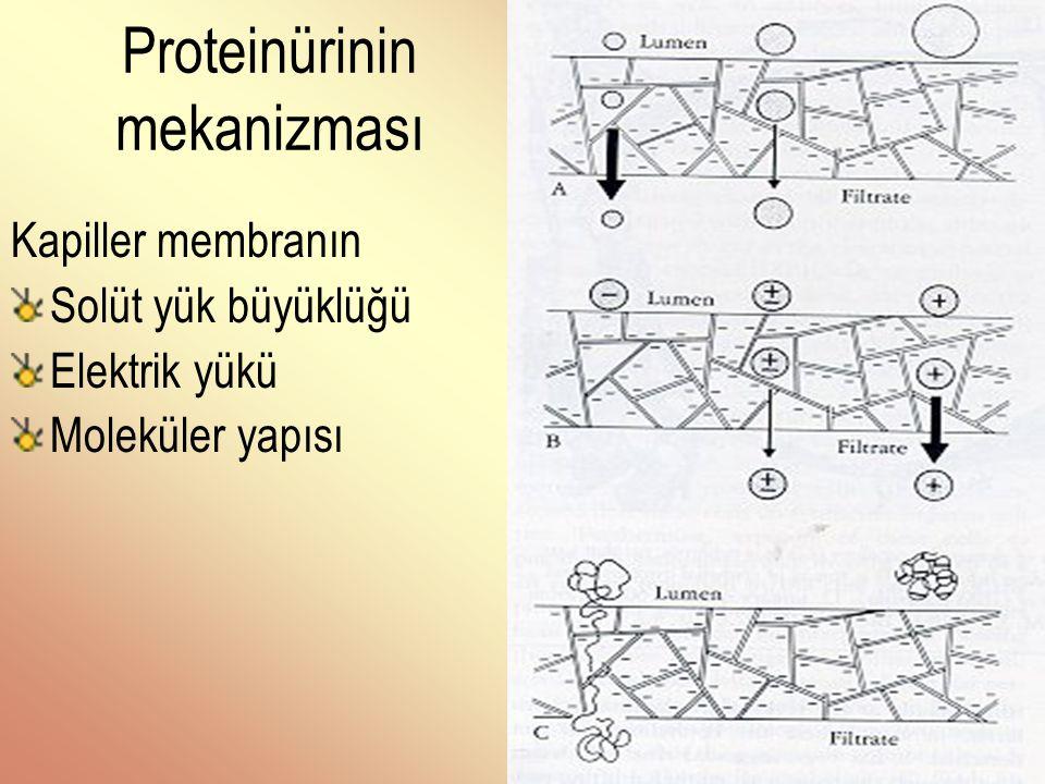 . MİNİMAL LEZYON HASTALIĞI - PATOLOJİ - Işık mikroskobu: Normal İmmunfloresan mikroskobisi: Belirgin immun depolanma yok Elektron mikroskobu: Epitel hücrelerinin ayaksı çıkıntılarının kaybı