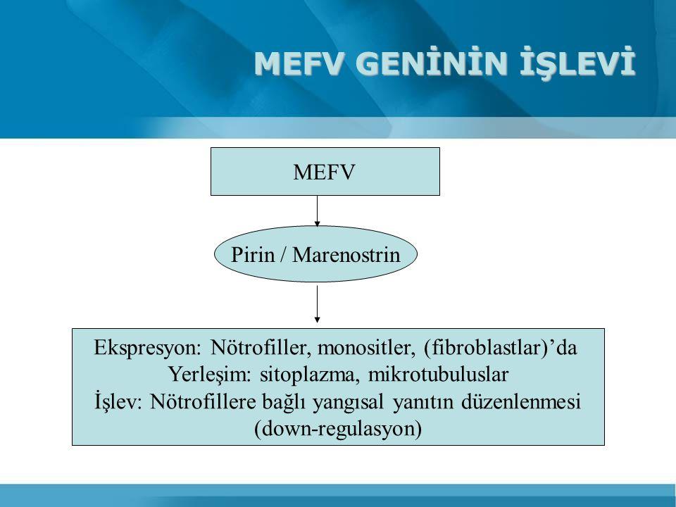 MEFV GENİNİN İŞLEVİ MEFV Pirin / Marenostrin Ekspresyon: Nötrofiller, monositler, (fibroblastlar)'da Yerleşim: sitoplazma, mikrotubuluslar İşlev: Nötr