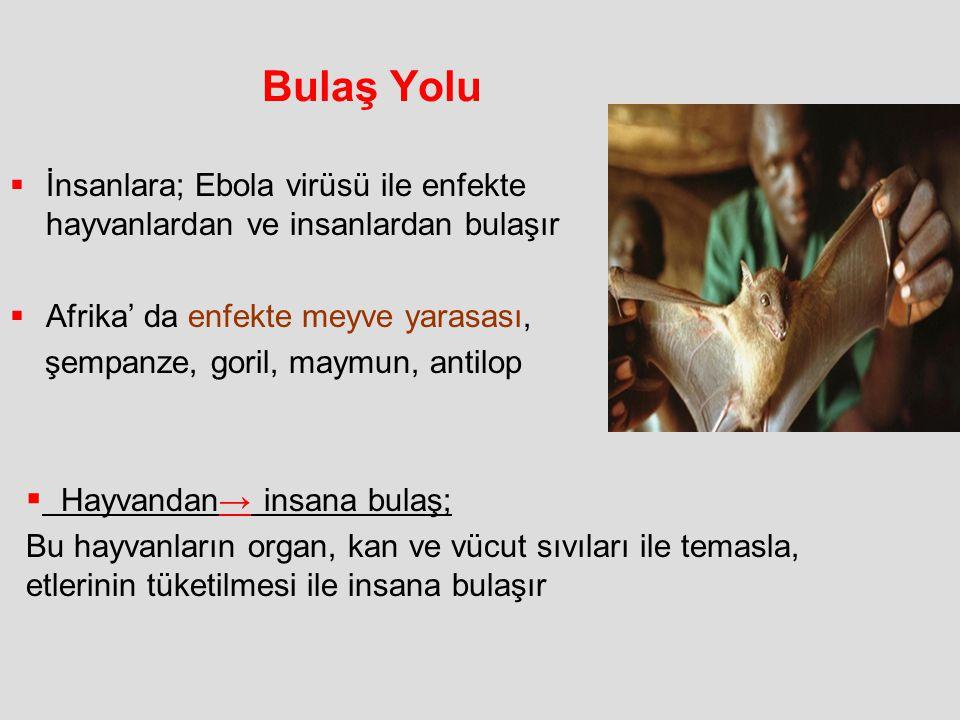 Bulaş Yolu  İnsanlara; Ebola virüsü ile enfekte hayvanlardan ve insanlardan bulaşır  Afrika' da enfekte meyve yarasası, şempanze, goril, maymun, ant