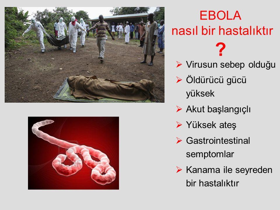 EBOLA nasıl bir hastalıktır ?  Virusun sebep olduğu  Öldürücü gücü yüksek  Akut başlangıçlı  Yüksek ateş  Gastrointestinal semptomlar  Kanama il
